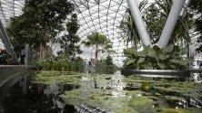 Паркът на летище Чанги в Сингапур. Цялостната конструкция включва хотел, ресторанти, магазини и красив парк със стъклен покрив и езеро с лилии