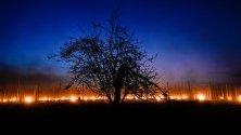 Студената пролет принуди лозарите в Германия и Франция да запалват огньове или свещи против замръзването на лозята.
