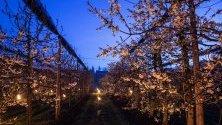 Швейцария се присъедини към опитите на Франция и Германия в борбата срещу замръзването на растенията поради студените пролетни условия.