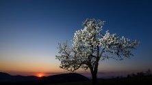 Приказна пролетна фотография на унгарския изгрев.