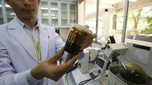 Университета в Рангсит, Тайланд отвори модерна лаборатория за изследване на въздействието на медикаменти с конопена основа и качеството на медицинското лечение с тези лекарства.