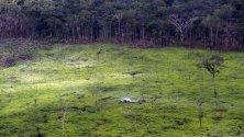 В Колумбия започнаха разговори за обезлесяването в Националния парк Серрания де Чирикеки, Гуавиаре, Колумбия.