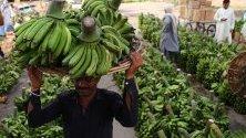 Работник носи банани на главата си на пазара на плодове и зеленчуци по време на свещения месец Рамадан, в Карачи, Пакистан.