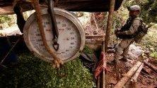 Ликвидиране на посевите от кока от националната колумбийска армията в Тумако, Колумбия.
