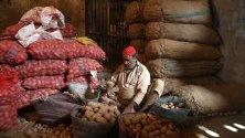 Работник сортира картофи на пазара в Карачи, Пакистан.