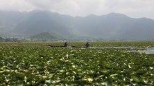 Кашмирски мъже карат лодка по водите на езерото Дал близо до цветя на лотос време на свещения месец Рамадан в Шринагар, лятната столица на индийския Кашмир. Мюсюлманите по света празнуват Рамадан, като се въздържат от ядене, пиене и сексуални действия ежедневно.