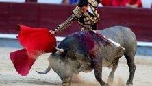 Бик боецът Октавио Чакон се бие с бик по време на 16-ия ден от изложението на бикобоите Сан Исидро в арената за бикове в Лас Вентас в Мадрид, Испания.
