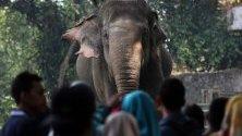 Посетители в зоологическа градина застанали около слон в зоологическата градина Рагунан в Джакарта, Индонезия по случай края на свещения месец Рамадан.