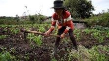 Ангелина Алтамирано, на 76 години, работи върху земеделски култури по време на интервю в село Плазуела, Еквадор. Плазуела е малко селско селище в Андите в Еквадор, в сърцето на кантона Пиларо в провинция Тунгурауа, обитавана от дузина възрастни жени, които не са склонни да напуснат тази тиха и студена земя.