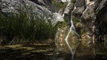 Гледка към водопадите Дарвин, създали оазис на живота и различна екосистема в Долината на смъртта, близо до Пека Крийк, Калифорния, САЩ.