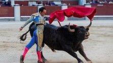 Испанският тореадор Кристиан Ескрипано се бие с бик по време на 29-ия ден от панаира Сан Исидро в арената за бикове в Лас Вентас в Мадрид, Испания.
