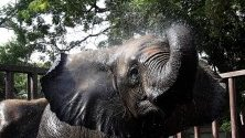 Слонче взима душ в зоологическа градина в Карачи, Пакистан.
