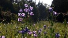 Диви цветя на пасище в близо до Тексас.