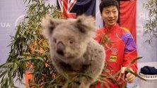 Китаецът Ma Long  позира за снимки с коала по време на световното турне на ITTF Australia Open 2019 в Джилонг, Австралия.