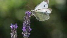 Пеперуда кацнала върху цвете в ботаническата градина Palmengarten във Франкфурт, Германия.