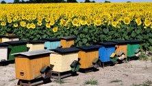 Гледка към цъфнали слънчогледи и пчелни кошери в Grochowce, югоизточна Полша.