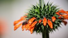 Пчела кацнала върху цвете в ботаническата градина Palmengarten във Франкфурт, Германия.