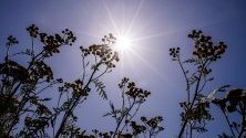 Слънце белсти над растения на полето в Бродовин, Германия.