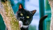 Изоставена котка в приют за животни в Брюксел, Белгия.