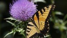 Пеперуда кацнала върху диво цвете, Тексас, САЩ.