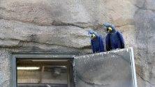 Папагали седят върху врата в Зоологическата градина-  Берлин, в Берлин, Германия.