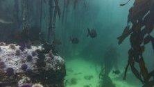 Индийският океан е третият по големина океан на Земята.Там живеят редица интересни представители на животинският свят. В затоплените води живеят разнообразни корали, които са причина и са образуването на коралови атоли на места.