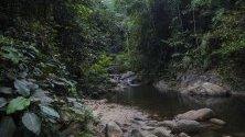 Джунгла в близост до курорт The Dusun , в Серембан, Малайзия.