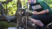 Лондонският зоопарк извършва мащабно измерване на теглото и размерите на своите обитатели.