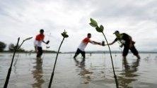 Жители на провинция Ачех в Индонезия посяват мангрови дървета. Създаването на крайбрежно мангрово блато е част от усилията за предпазване на областта от цунами.