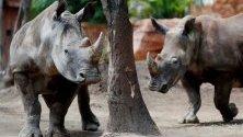 Зоологическата градина в Гватемала вече има нови обитатели. Няколко бели южноафрикански носорози пристигат в зоопарка.