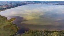 Сладководни водорасли се разпространяват в южния край на езерото Балатон в устието на река Зала,Унгария. Изследователи подозират, че фосфорът, избягал от утайката на езерото, може да бъде причина за това сравнително рядко явление, започнало в края на август.