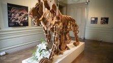 Дървена реплика на изобретението на Леонардо Да Винчи, създадена преди 500 години, е изложена в Италианския културен институт в Париж, Франция.