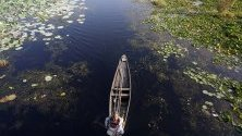 Жител на Кашмир преминава с лодката си през езерото Дал в Шринагар - лятната столица на Кашмир. Езерото е известно с плуващите си зеленчукови градини и лотусите, използвани за прехрана за добитъка.