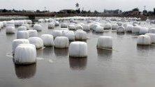 Наводнено поле от прелялата река Сегура след проливните дъждове в Аликанте, Испания. Властите отпуснаха над 23 милиона евро помощи за засегнатите райони.
