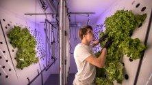 Ян Лукачевич - шеф ва чешкия проект Marsonaut, промерява насаждения с марули в лаборатория в Прага. Проектът симулира условия за отглеждане на зеленчуци на Марс.