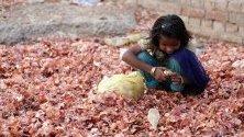 Дете от гетото в Амритсар, Индия, търси лук за прехрана сред остатъци на зеленчуков пазар в предградията. Лукът поскъпна в Индия заради нарушените доставки след наводненията.