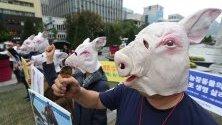 Активисти за права на животните протестират в Сеул с искане за прекратяване на избиването на прасета заради африканската чума. Южна Корея обяви 10 случая на АЧС от 17 септември.