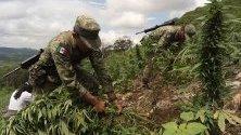 Мексикански агенти унищожават насаждения от 3 хектара с марихуана в планинския щат Синалоа.