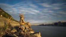Статуя на седящ човек, сътворен от плаващи клонки по река Дунав, дело на Дима Шльонкин. Статуята е поставена край Моста на свободата в Будапеща, Унгария.