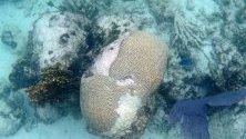 Избелване на корали по крайбрежието на Исла Контой, Мексико. Властите излязоха с план срещу избелването, след като за 17 месеца са измрели повече корали отколкото за последните 40 години.