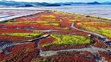 Разноцветни есенни треви покриват солни блата в провинция Синан, Южна Корея.