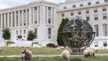 Овце пасат в тревните площи пред централата на ООН в Женева, Швейцария.