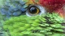 Папагал Зеленобуза амазона, обитател на зоопарка в Хайделберг, Германия.