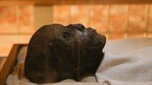 Археолози откриха над 20 древни саркофага в Луксор