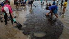 Доброволци почистват разлив от петрол на плаж в щата Пернамбуко, Бразилия. Общо 525 тона са почистени от 201 плажа от появата на първия петролен разлив по североизточното крайбрежие на Бразилия.