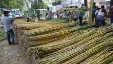 Работници подреждат захарна тръстига в Мачхоуа, Индия, преди наближаващия празничен сезон. Захарната тръстика се използва за създаване на ритуални форми.
