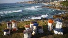 """Скулптурата """"Морска градина"""", дело на Сали Портной, край Бонди Бийч в Сидни, Австралия. Тя е част от 23-тото издание на изложбата """"Скулптури край морето""""."""