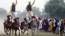 Сикхи от въоръжения орден на сикхите Ниханг показват ездачески умения върху четири тичащи коне по време на Деня на победата в Амритсар, Индия. Денят се чества след фестивала Дивали.