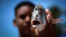 Рибар държи риба в Ресифе, Бразилия. Областта е една от многото засегнати от петролни разливи от незнаен източник. Близо 300 плажа по крайбрежието са заляти от петрол.