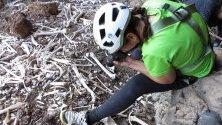 Открит гроб с човешки останки на над 70 души от преиспанската ера, открит от група аматьори-археолози в пещера в Гран Канария, Канарските острови.